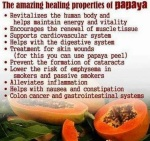 papaya health benefits 06 761832